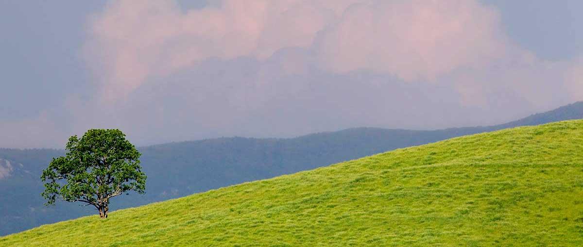 pasture-home-slider