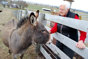 Sue petting Nicky the donkey